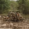 AP logs