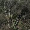 SW fallen tree